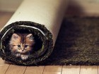 Little-Cat-The-Carpet